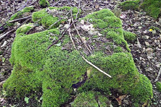 Teppiche-Etage im Feuchtwald: weich, weich, weich.