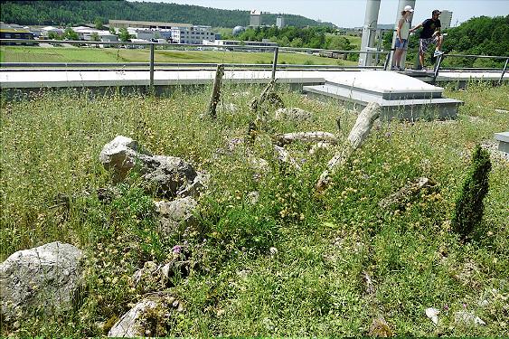 Naturschutz hoch auf den Dächern - Firmengelände