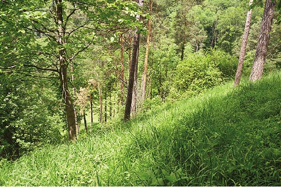 Wald am Immenberg: steil, aber weich und kühl
